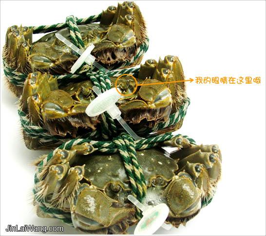 [人民網] 陽澄湖大閘蟹的營銷之魅