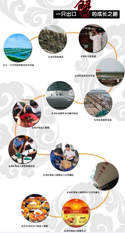 金來旺為北京人民提供出口返內銷大閘蟹 江蘇大閘蟹領軍品牌