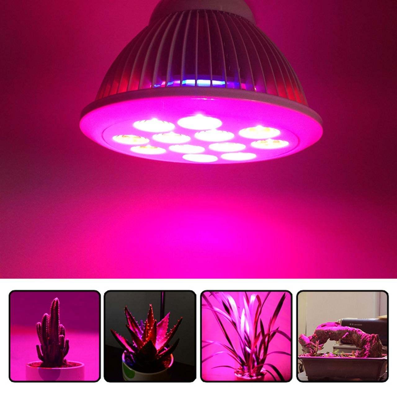 led植物灯 (2).jpg